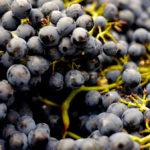 alcohol-berries